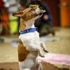 Trickdog Workshop_10