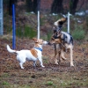Trickdog Workshop_14