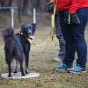 Trickdog Workshop_16