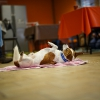 Trickdog Workshop_1