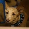 Trickdog Workshop_5
