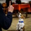 Trickdog Workshop_6