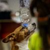 Trickdog Workshop_8