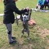 Trickdog April 2017_19